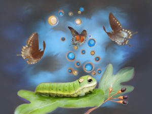 Compensatory drift rups vlinder